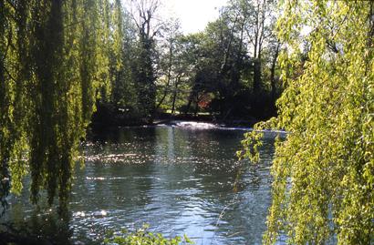 étang olivier lourches